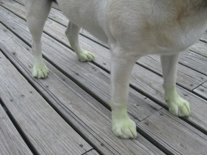 Green Grass Gives me Green Paws
