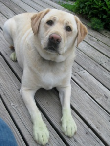 Look at my Green Paws...