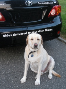 GeniusRide, Dog Friendly, Reasonable, & Drop off Service? Sweet