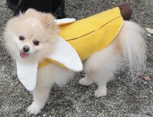 Just Bananas I Say!