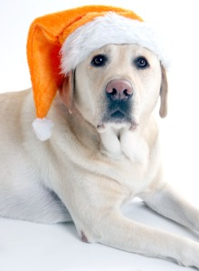 Happy Holidays! from all of us @metropaws.com!!!