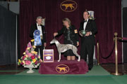 2010 Westminster Hound Winner