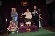 2010 Westminster Working Dog Winner