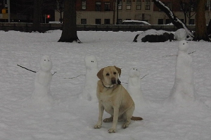 Sharing the park with some Snow Men